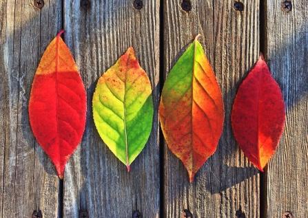 leaves-1051937